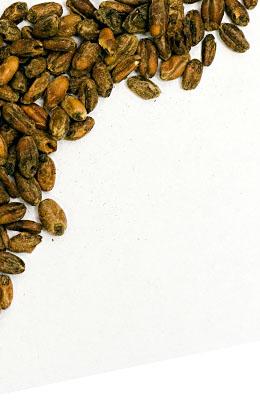Pszeniczny karmelowy 110-140 EBC Steinbach 1 kg