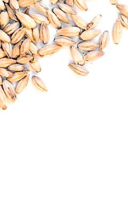 Słód do destylacji - Premium pot still malt - 3-5 EBC Crisp 1 kg