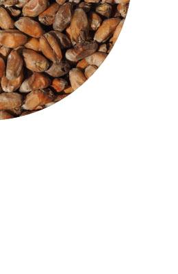 Pszeniczny podpiekany - toasted - 22-35 EBC Crisp 1 kg