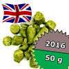 East Kent Goldings UK 2016 - 50 g granulat 5,1% aa