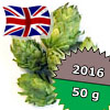East Kent Goldings UK 2016 - 50 g szyszki 6,47% aa