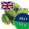 East Kent Goldings UK 2017 - 50 g szyszki 5,93% aa