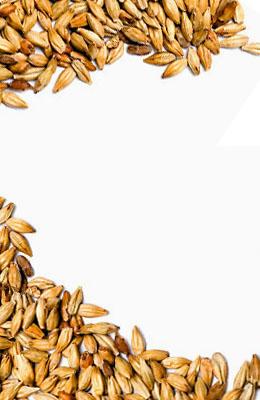 Caramel Aromatic 41-60 EBC Bestmalz 1 kg