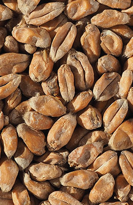 Wheat Malt 2,8-5,5 EBC Crisp 25 kg