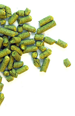 Saaz Late CZ 2020 - 100 g granulat 3,0% aa