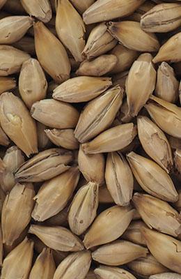 Heavily Peated Malt 3-5 EBC 50 ppm Crisp 5 kg